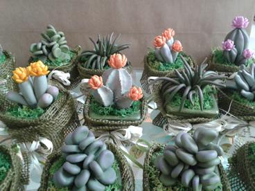 """le """"succulente"""" di Gattacicova"""